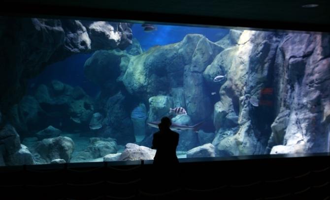 gijon-acuario