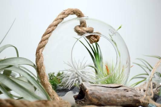 flechazosoctubre-plantas1.1