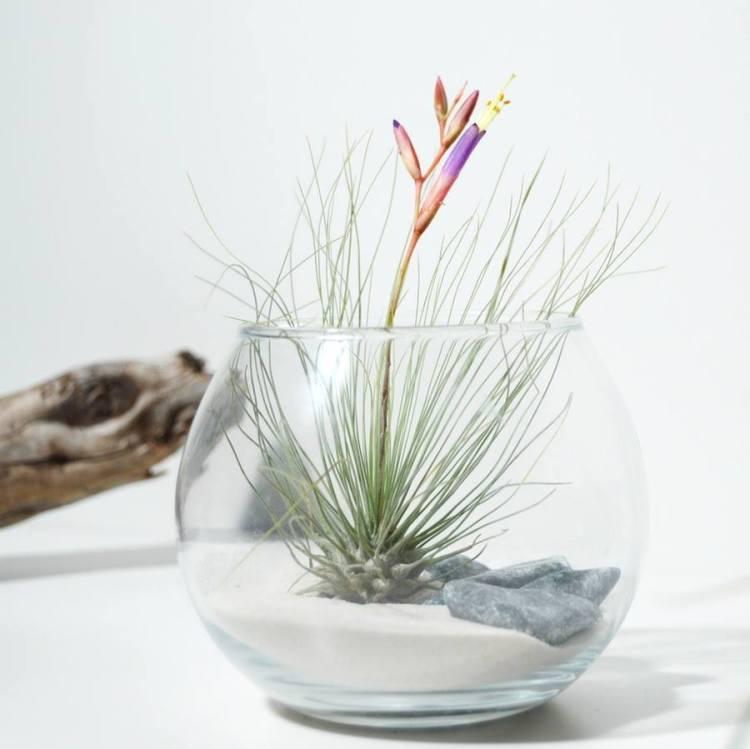 flechazosoctubre-plantas2